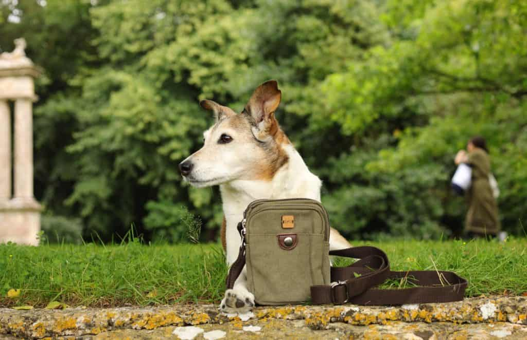 Dotty4Paws Product Photography