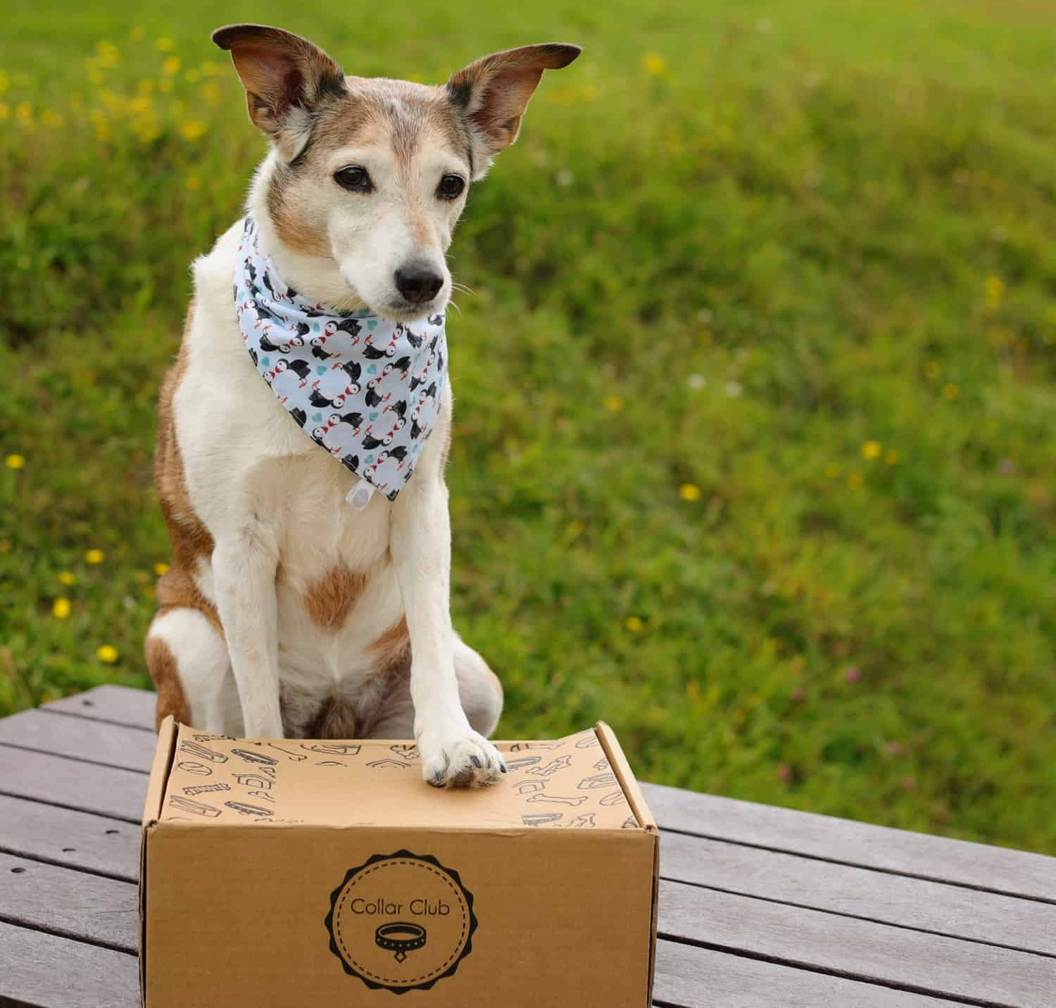 Collar Club Doggy Subscription Box