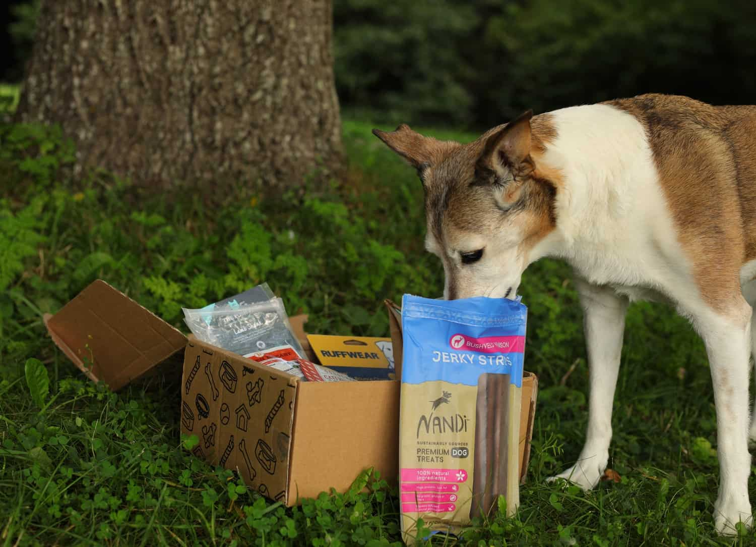 Collar Club Sustainable Subscription Box