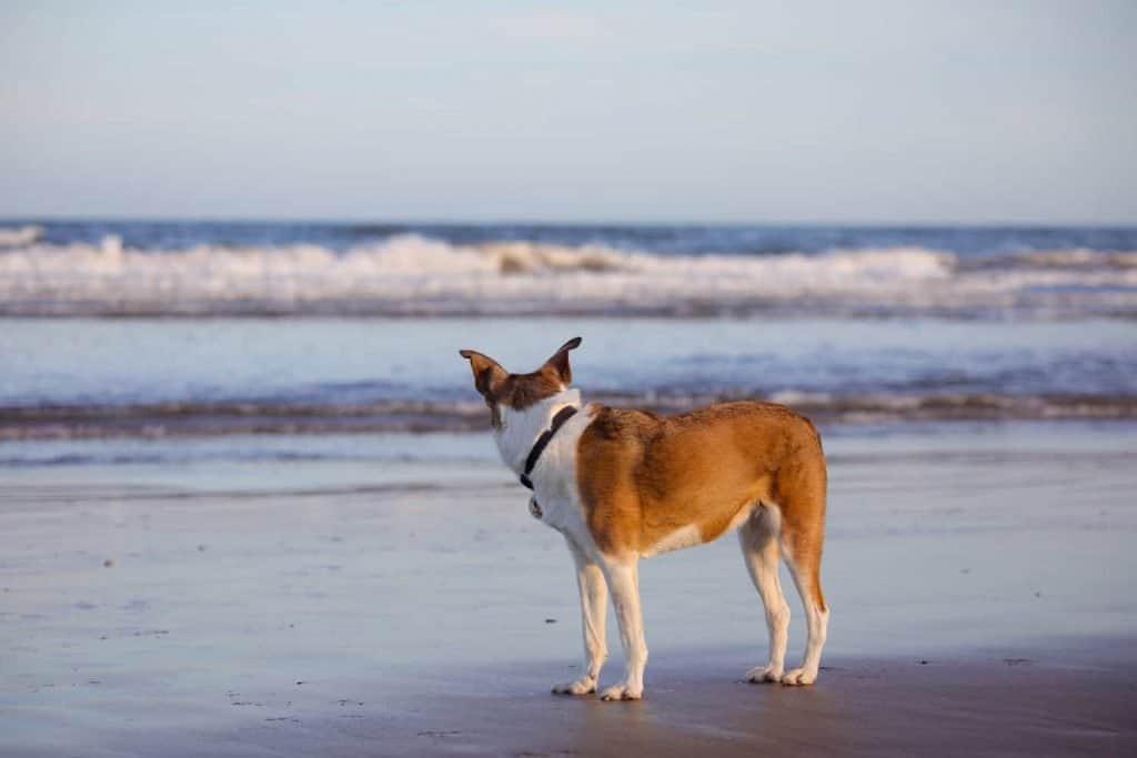 Dog Friendly Dawlish Warren Beach