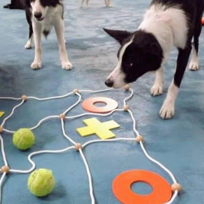 Colchester Dog Care