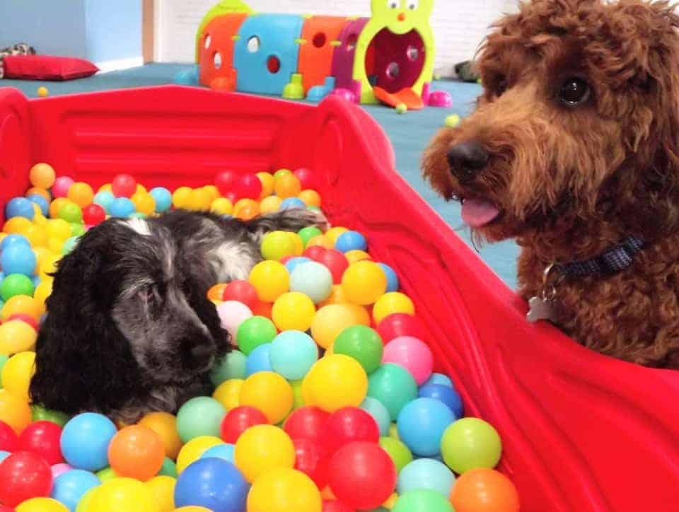 Colchester Canine Creche