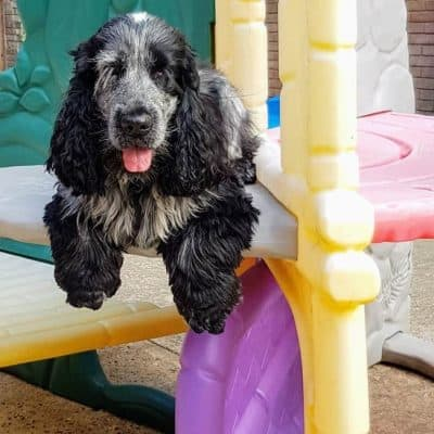 Colchester Dog Sitting