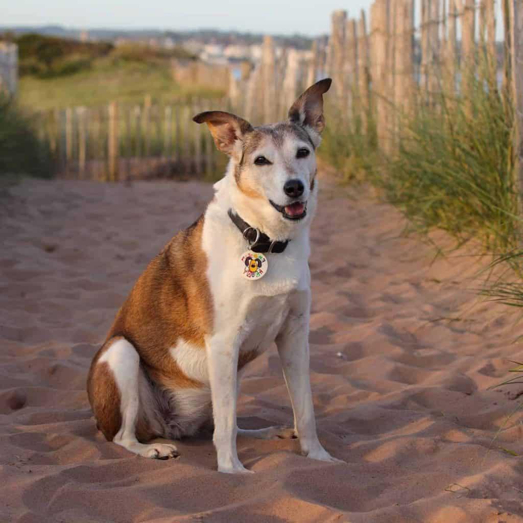Dog in sand dunes on Dawlish Warren Beach