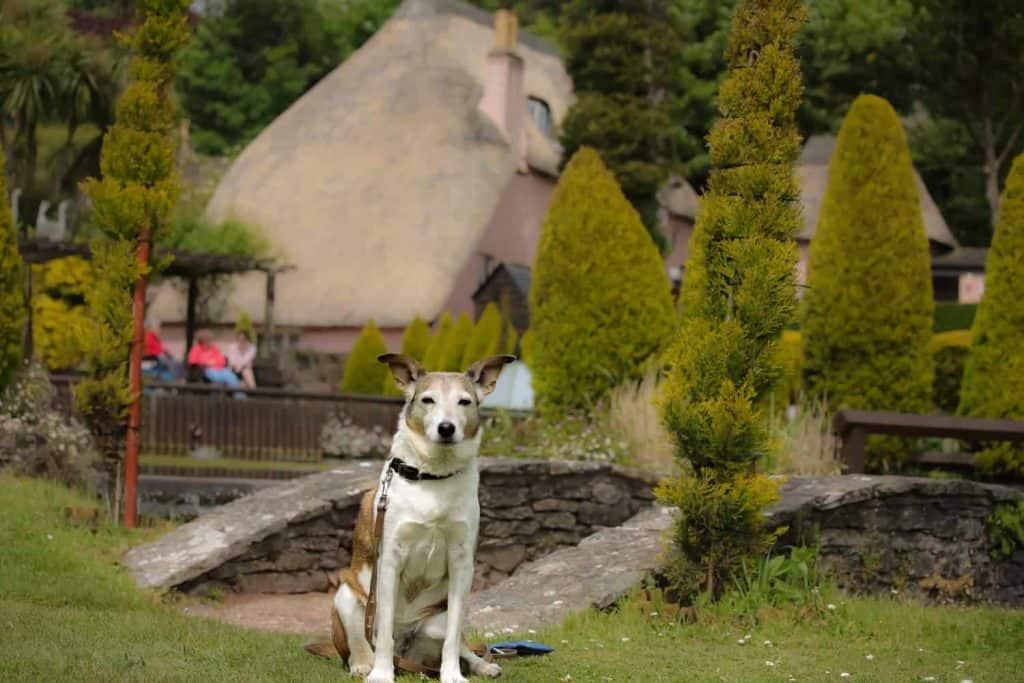 Cockington Garden Tea Rooms Dog Friendly Devon