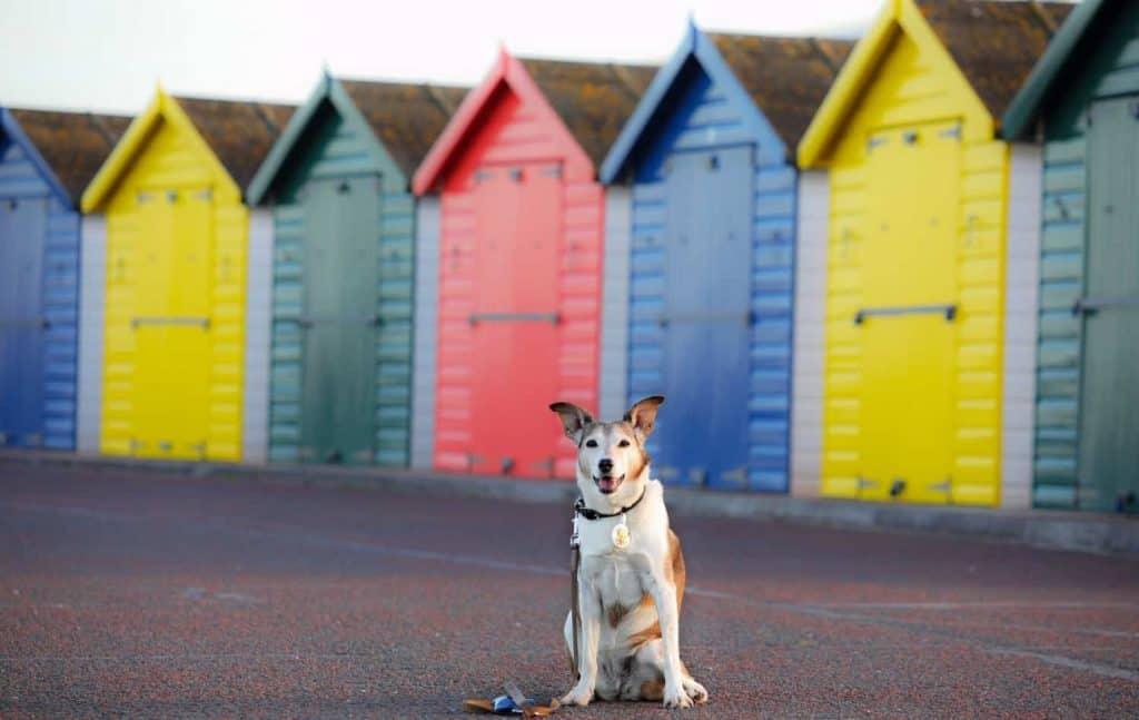 Colourful Beach Huts at Dawlish Warren Beach