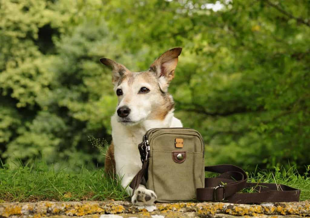 The Dandy Dog Company Walking Bag Review
