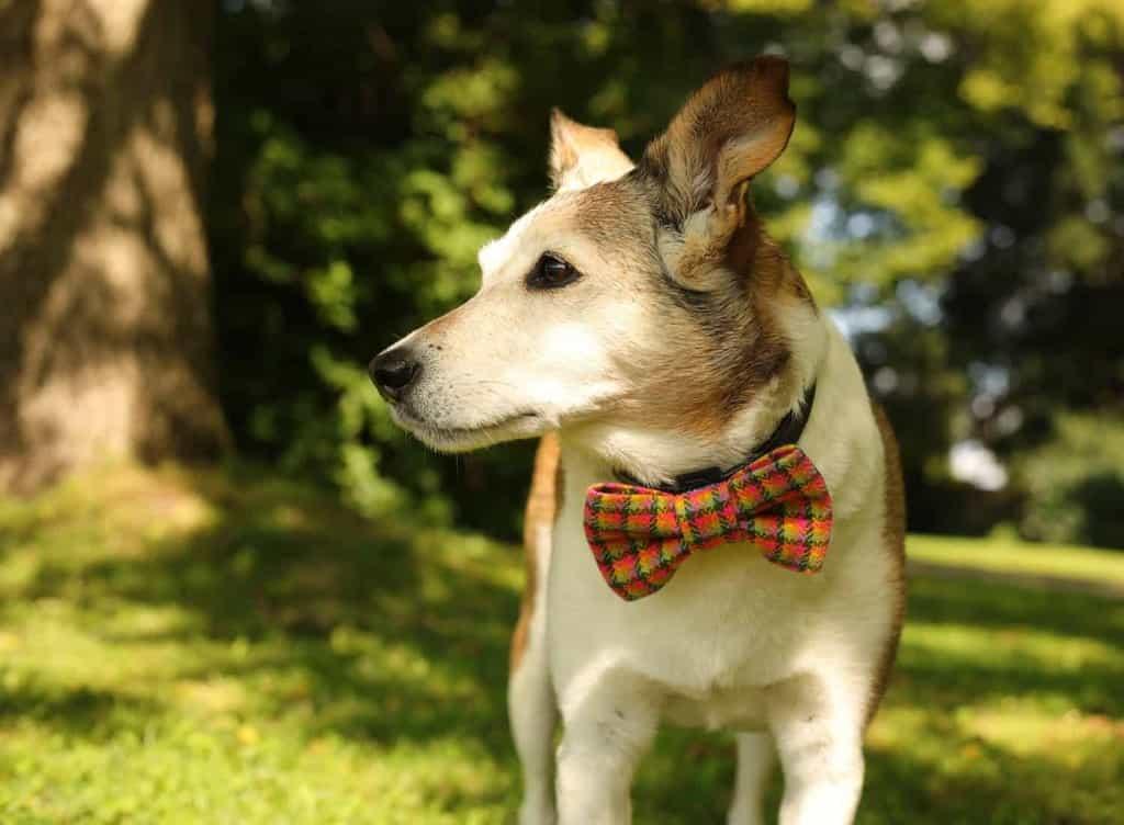 Pooch Bandana Tartan Dog Bow tie