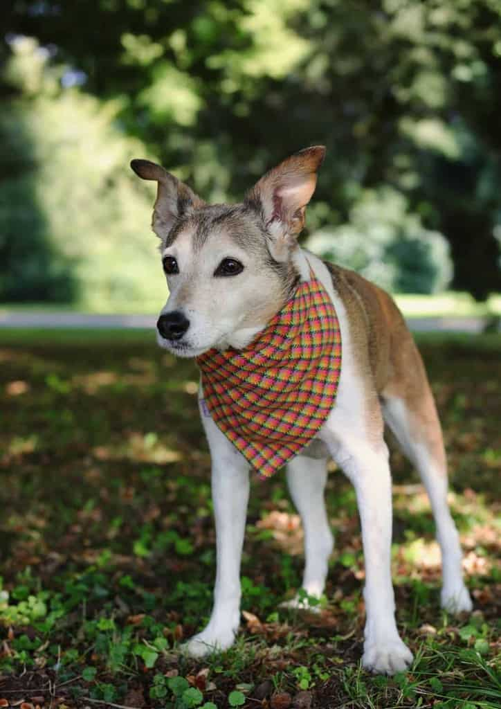 Pooch Bandana Stylish Dog Accessories