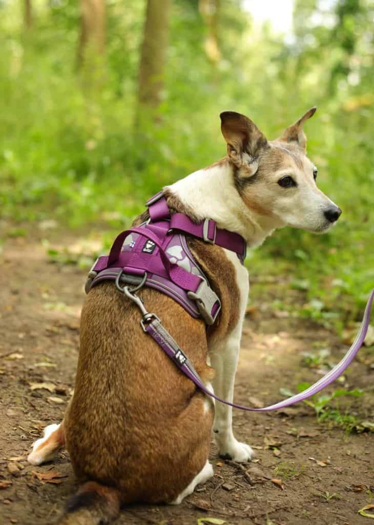The Weekend Warrior Harness and Lead by Hurtta Review