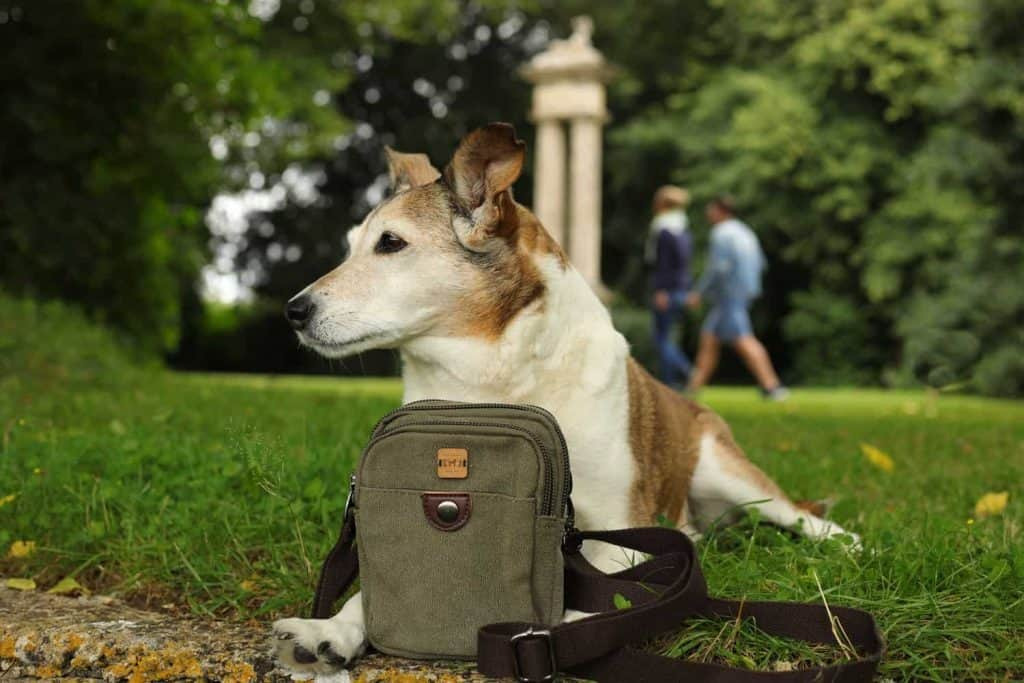 The Dandy Dog Company Compact Dog Walking Bag
