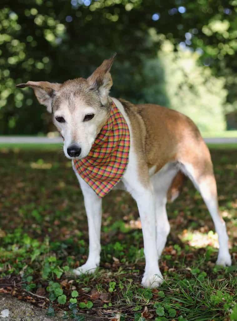 PoochBox Tartan Dog Bandana