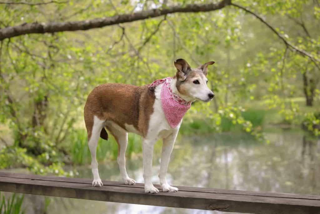 Dog Friendly Devon Canonteign Falls
