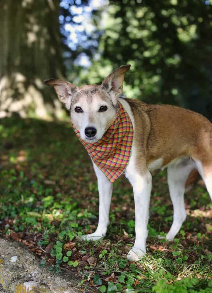 PoochBox Tartan Bandana for Dogs
