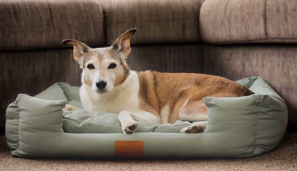 Dog Friendly Welcome Family Holiday Park Dawlish Warren Devon