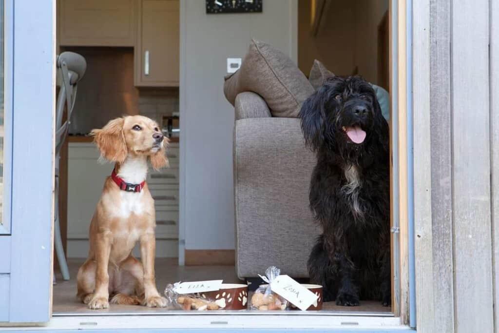 The Park 5 Star Dog Friendly Lodges Cornwall