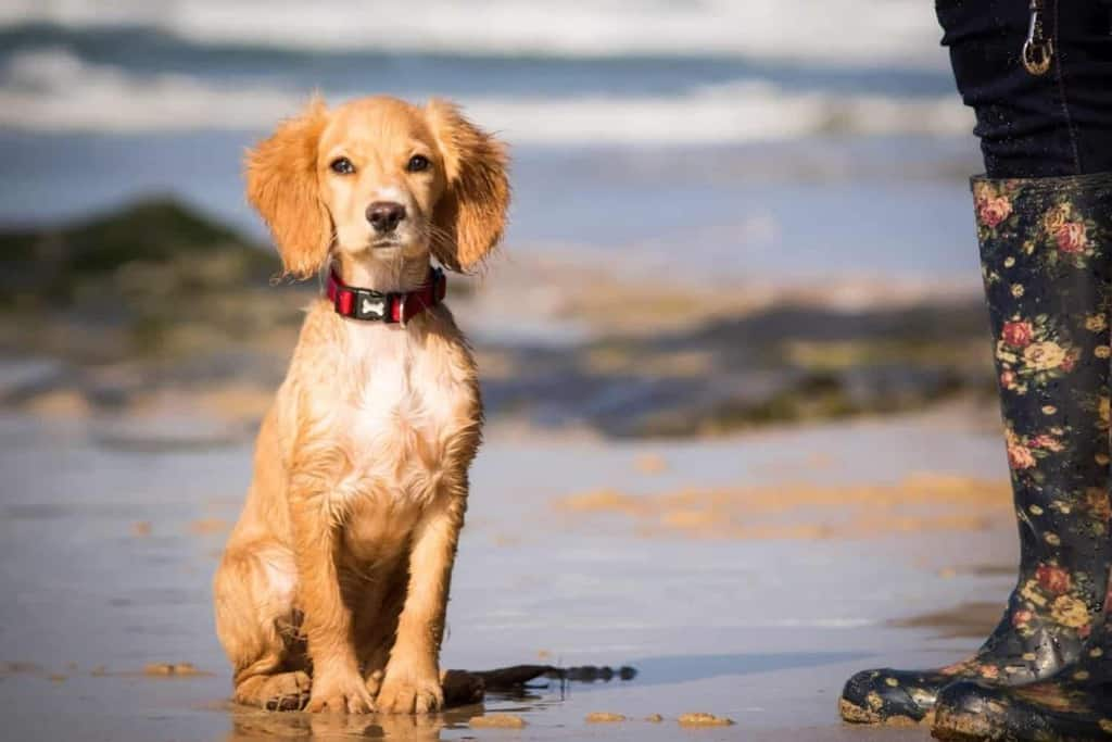 The Park Dog Friendly Lodges Cornwall