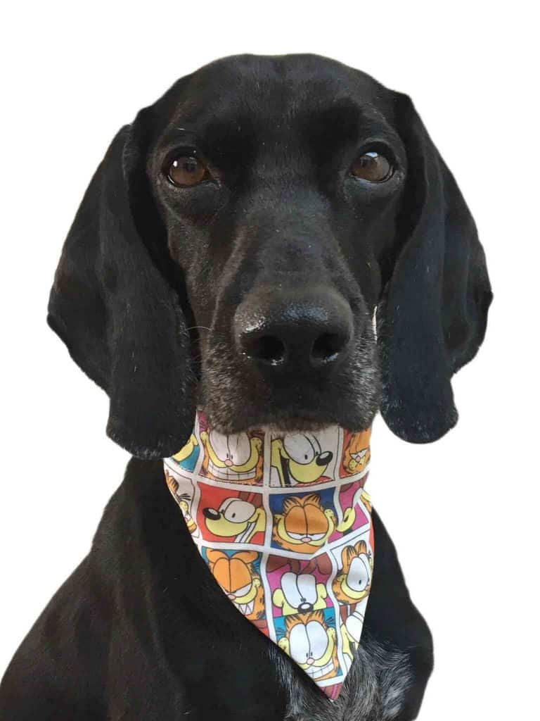 ZukieStyle Garfield Comic Strip Bandana