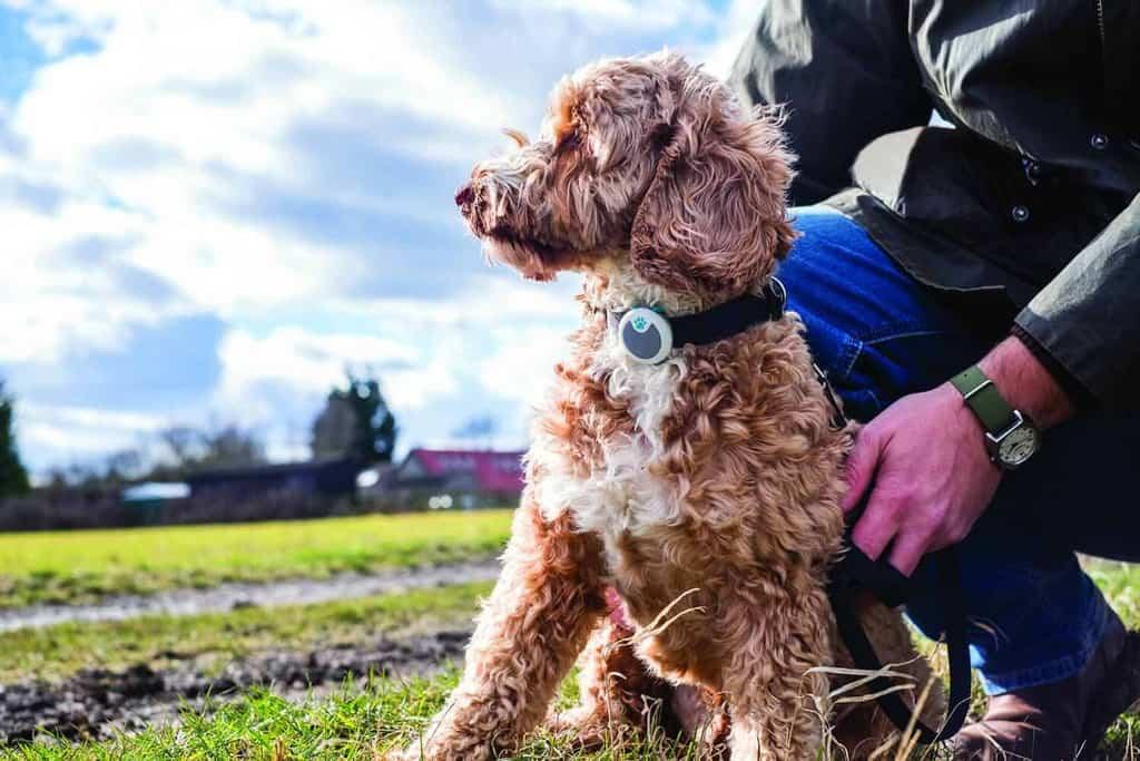 Sure Petcare Animo Dog Monitor