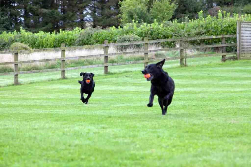 Greenwood Grange Dog Friendly Cottages Dorset Dog Exercise Area
