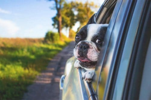 Rhino Dog Friendly Car Hire