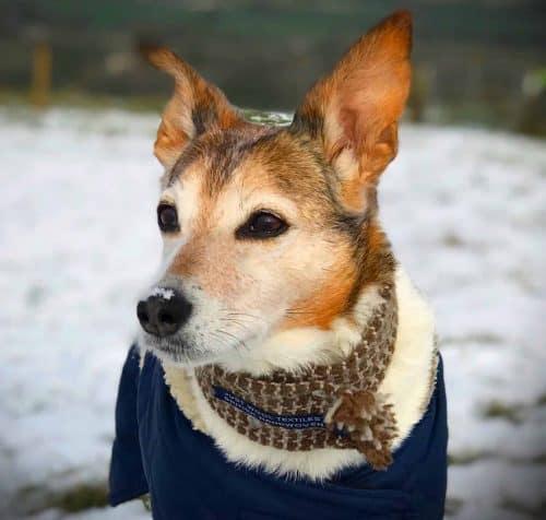 Just Wool Textiles Bespoke Dog Scarf