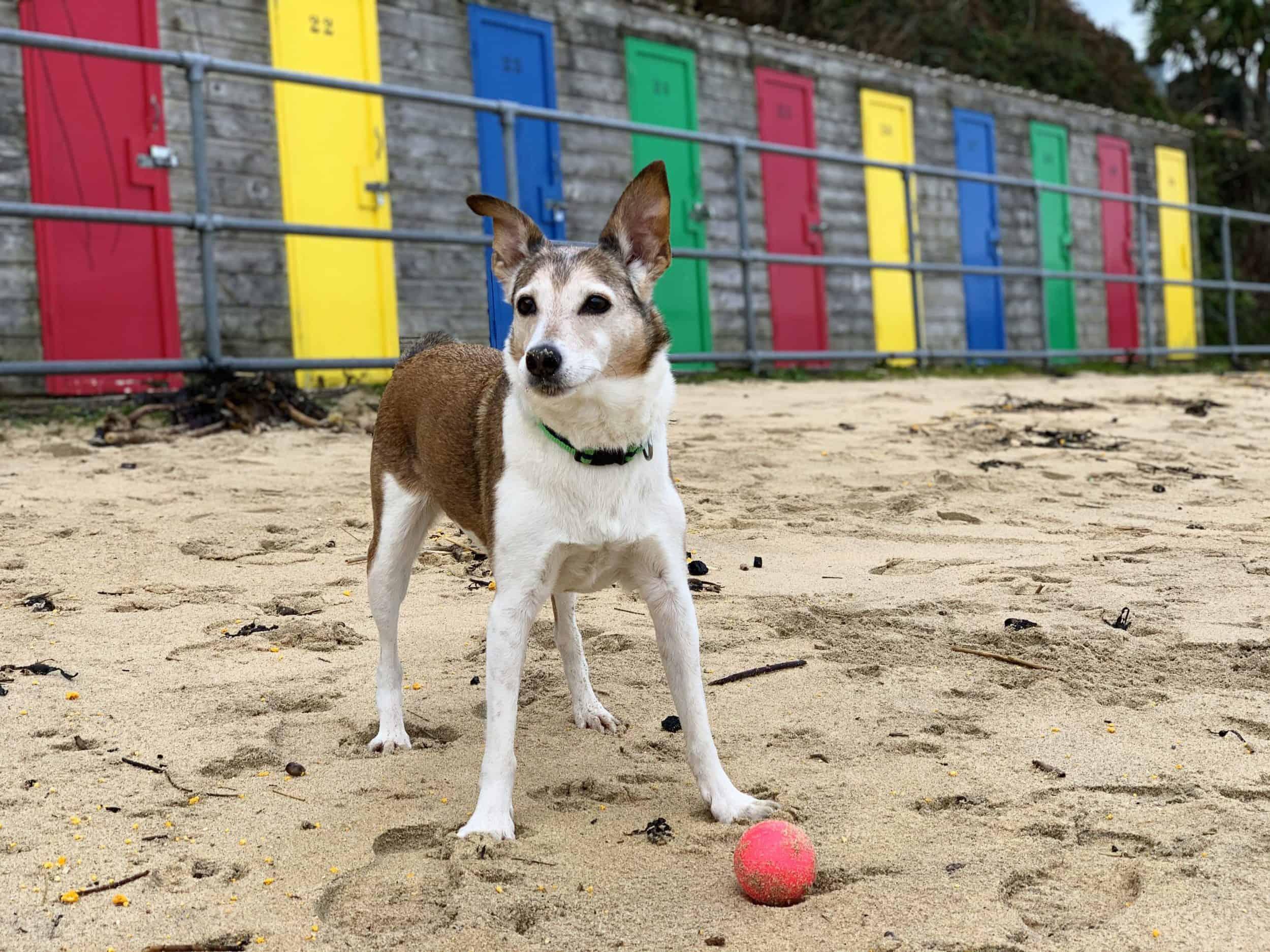 Dog Friendly Porthminster Beach