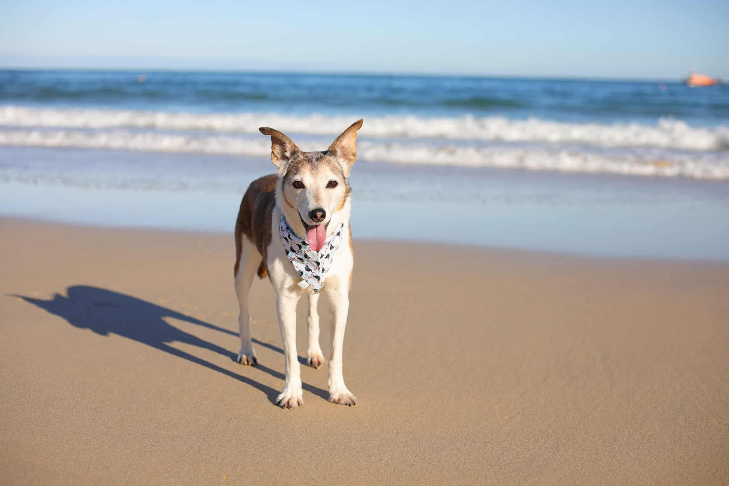 Poppy Dog on Porthminster Beach