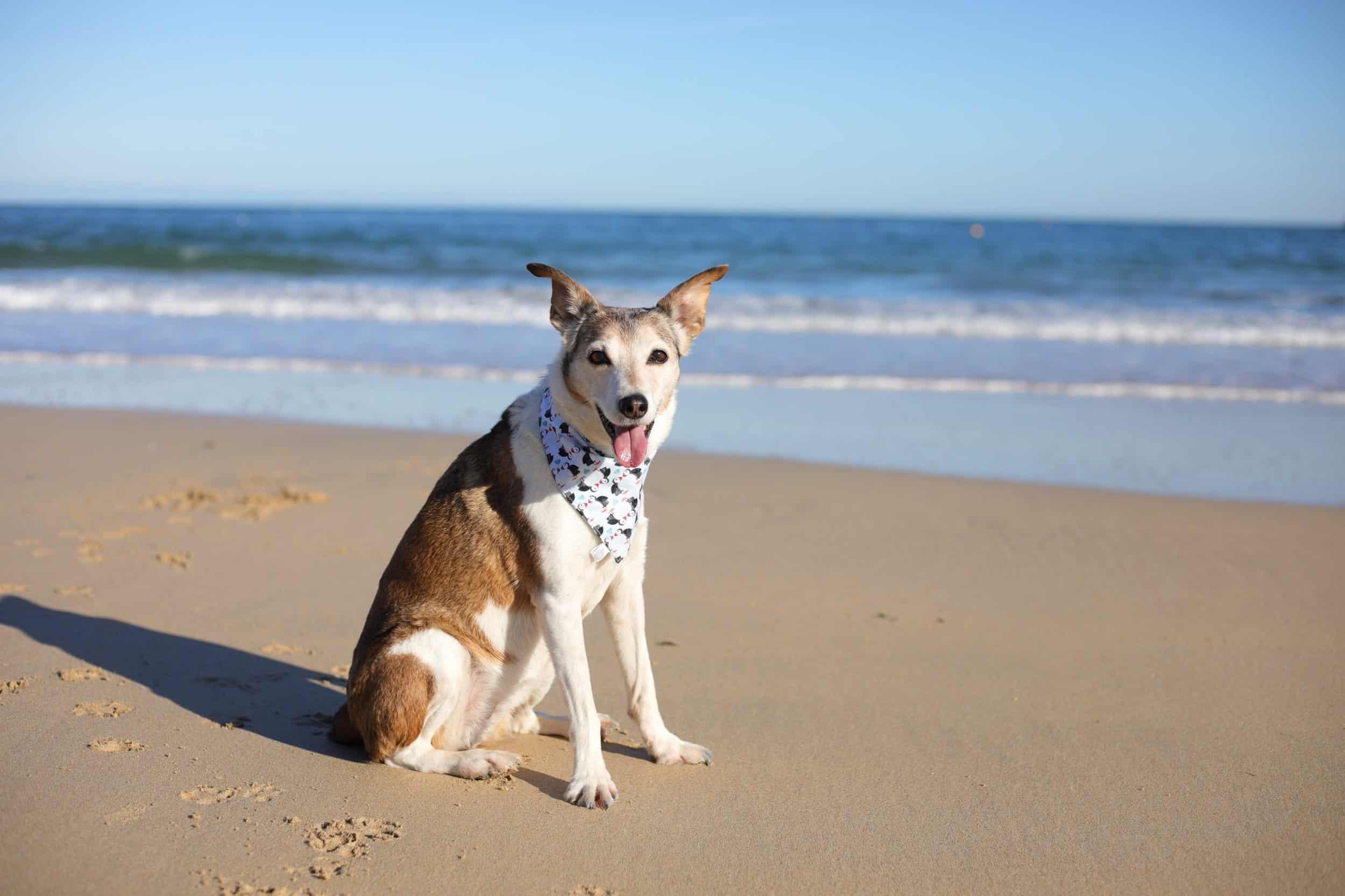 Poppy Dog in St Ives