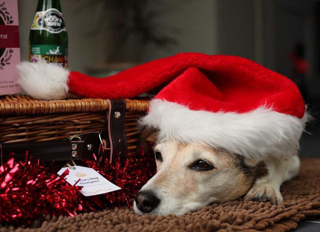 Christmas Hampers for Dogs