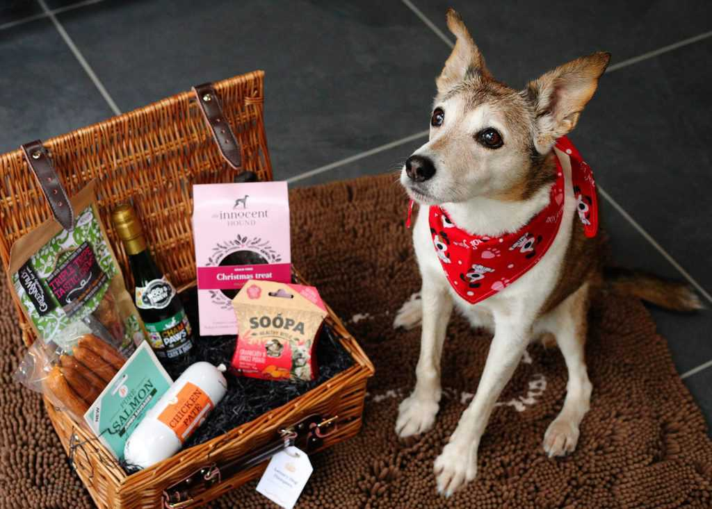 Luxury Dog Hampers