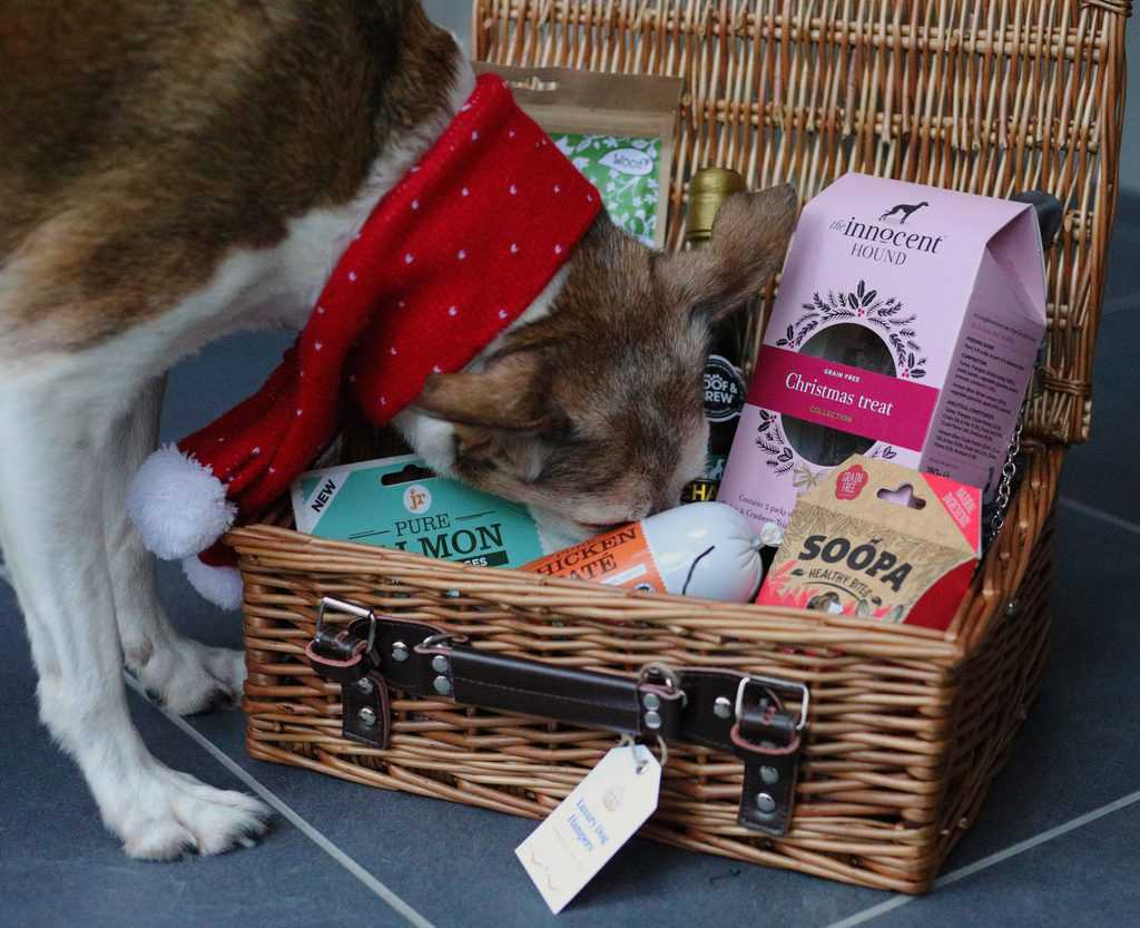 Luxury Gift Hampers for Dogs