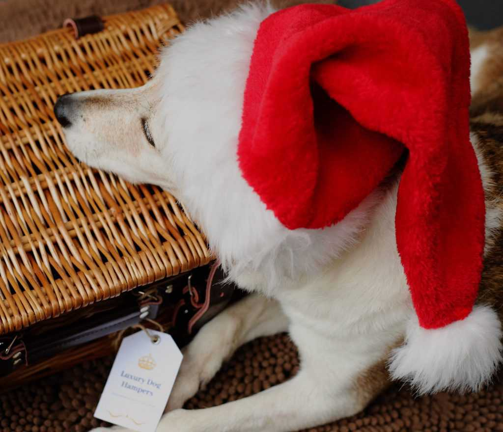 Dog Gift Hampers
