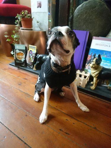 Dog In Lounge at Oriental Hotel Brighton