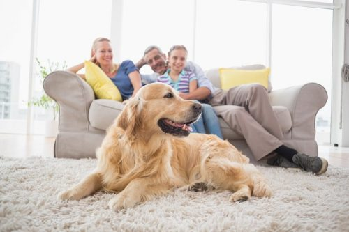 Dog-Friendly-Retreats-Family-Holidays