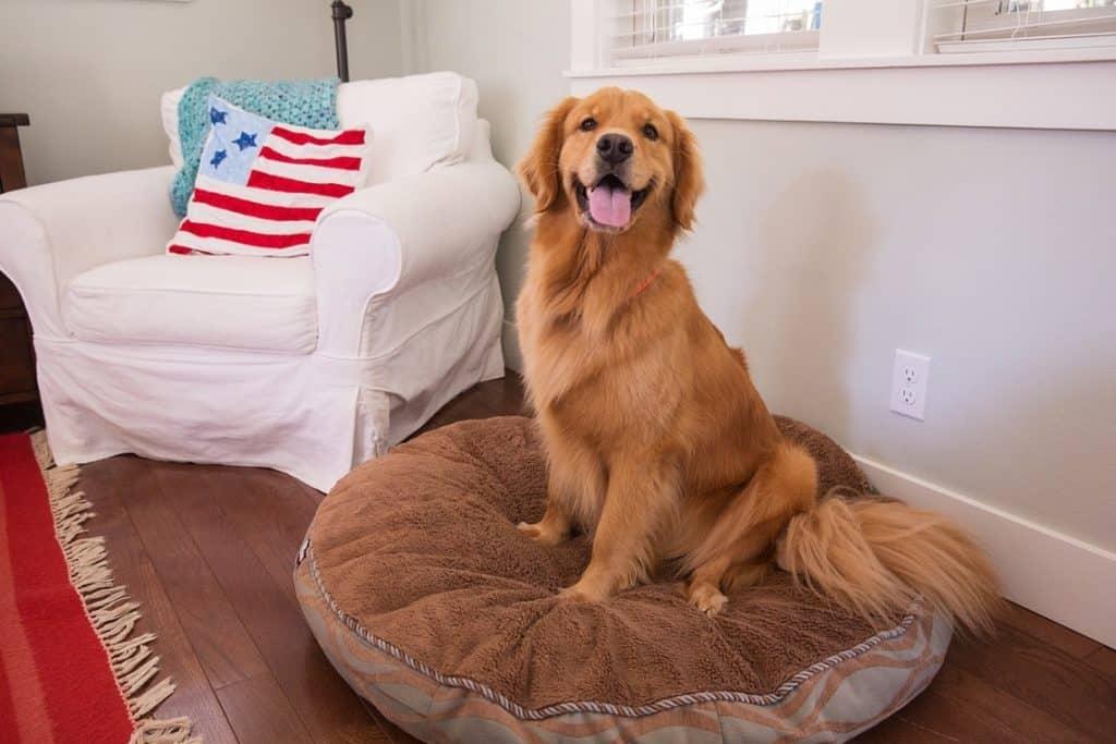Dog-Friendly-Retreats-Holiday-Home