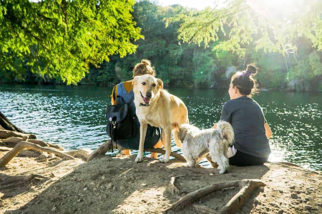 Dog-Friendly-Retreats-Holiday-Picnic