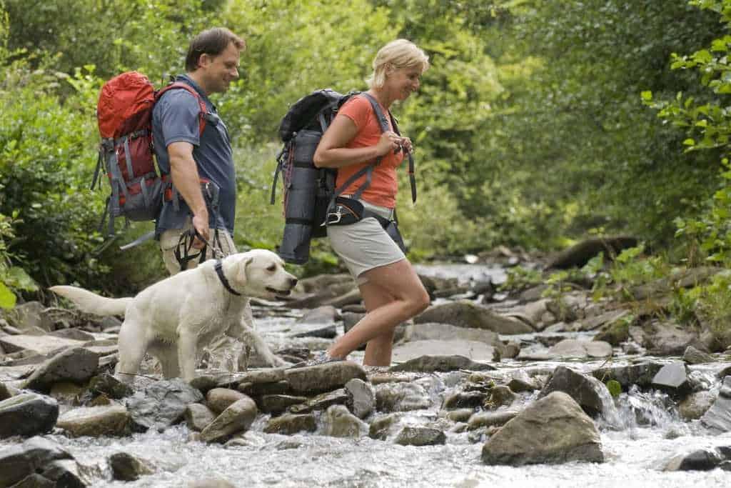 Dog-Friendly-Retreats-Walkies