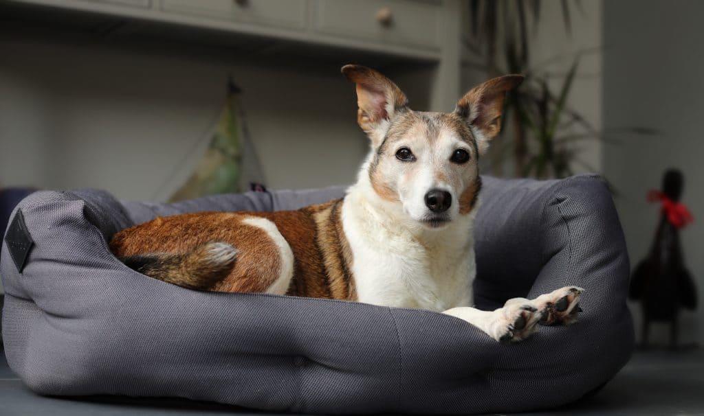 Dog Beds for Senior Dogs