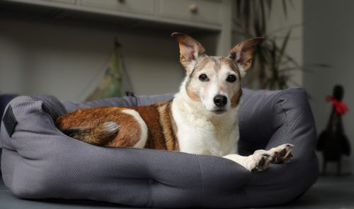 Dog Beds for Senior Dogs