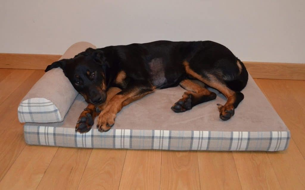 The Big Dog Bed Company Made To Measure Dog Beds
