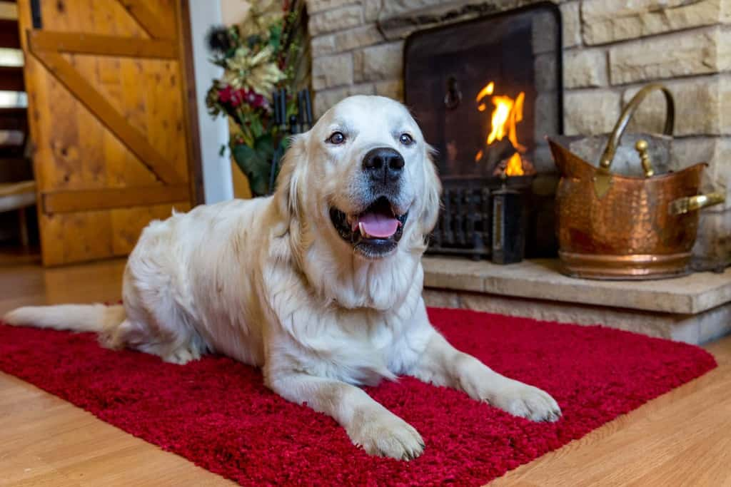 Dog By Fire at Rough Top Cottage