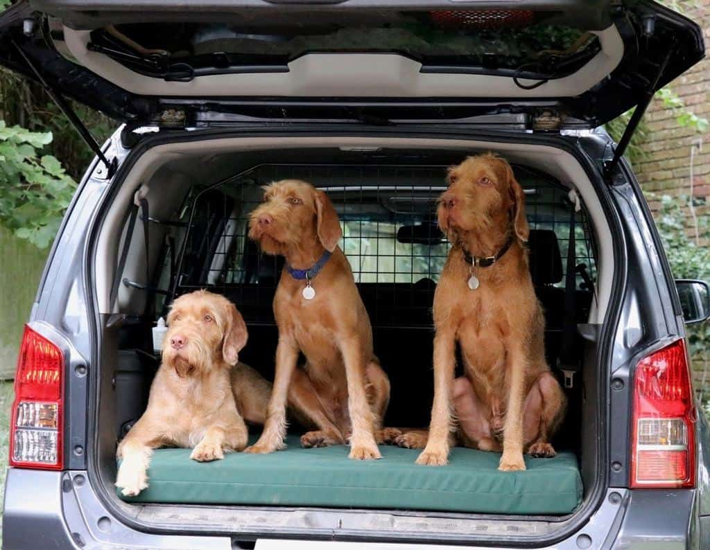 The Big Dog Bed Company Waterproof Dog Beds