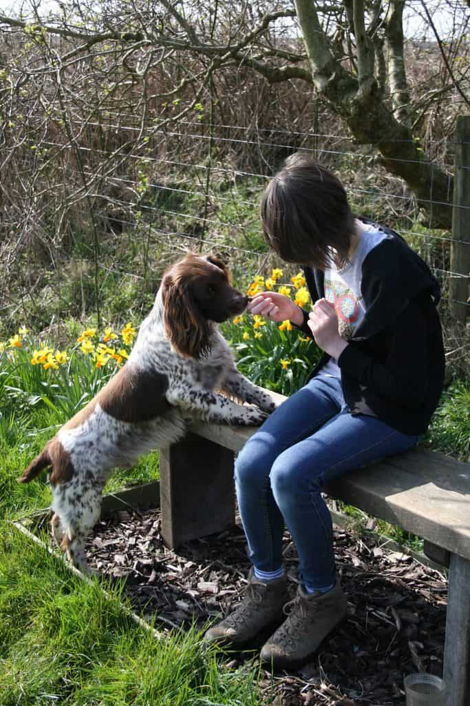 Warcombe Farm Dog Friendly Camping Park Devon