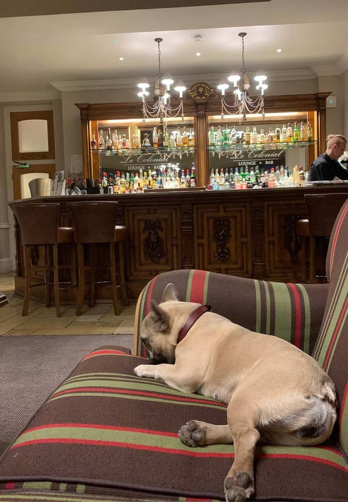 Dog in Bar at Dog Friendly Brockencote Hall Hotel