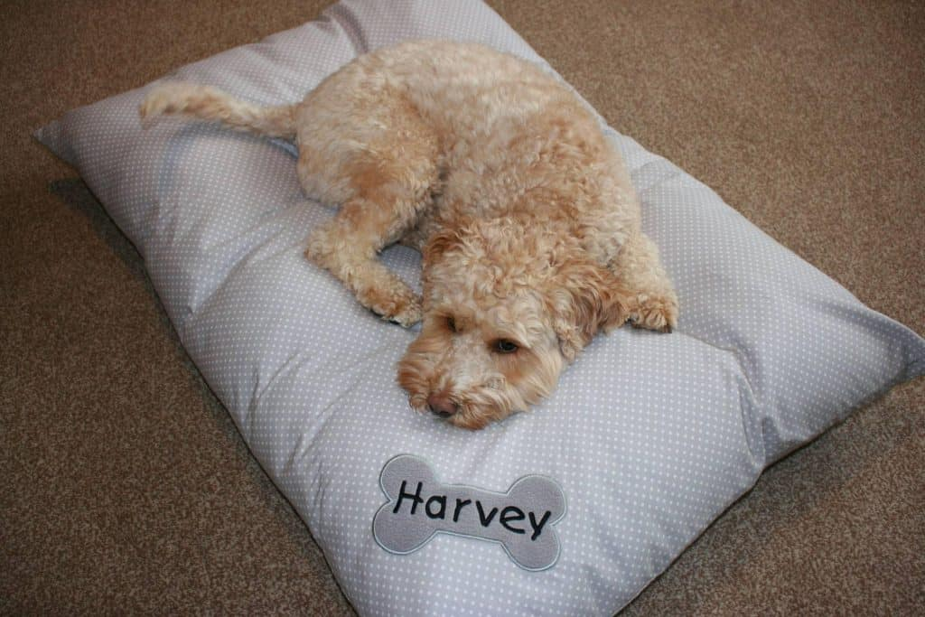 Personalised Dog Bed My Posh Paws