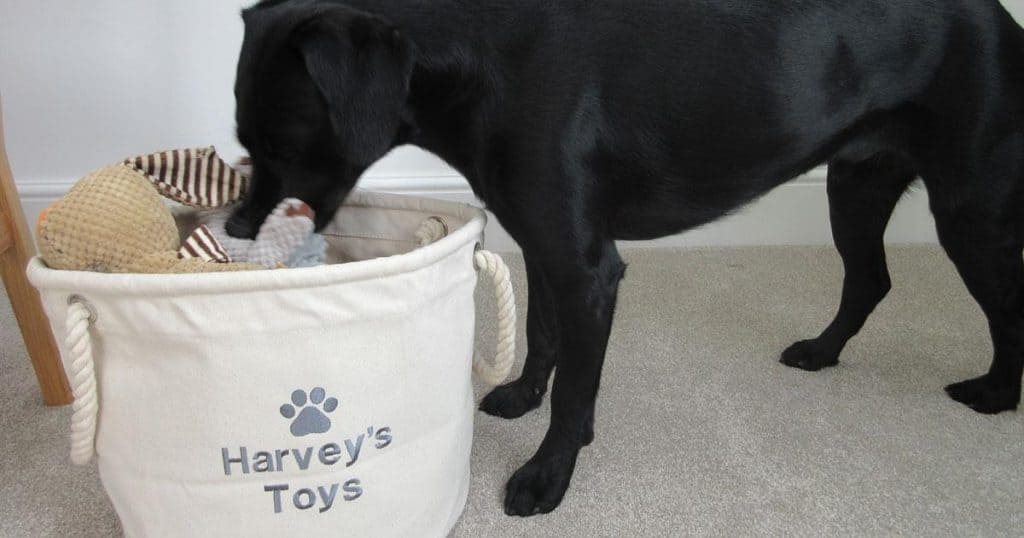 Personalised Dog Toy Storage My Posh Paws