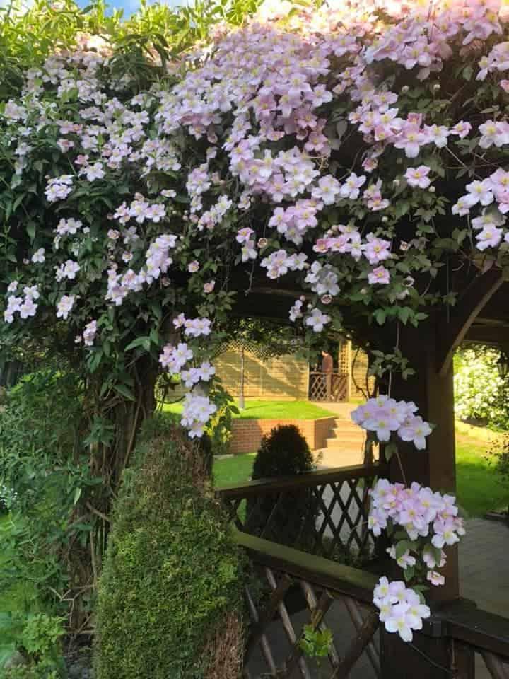 The Black Horse Inn Garden Maidstone Kent