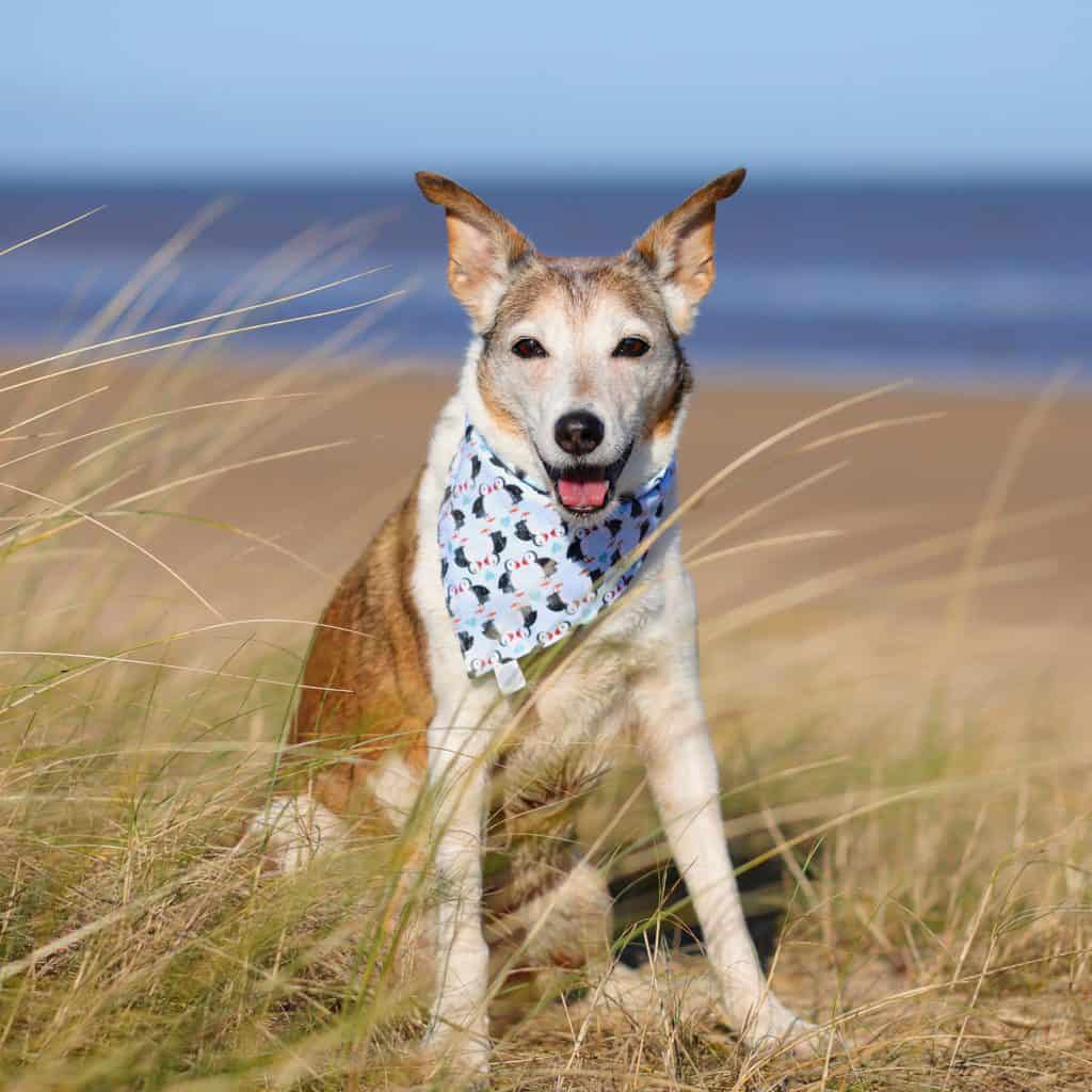 Dog on Brancaster Beach Norfolk