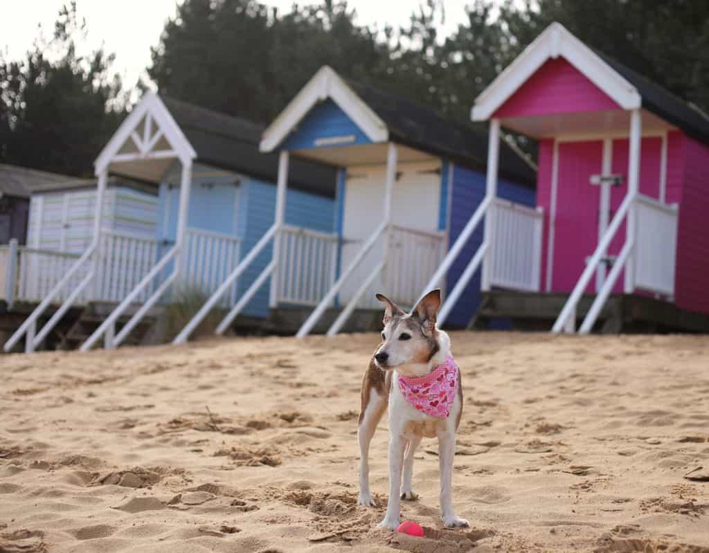 Beach Huts at Wells Next the Sea Beach Norfolk